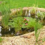 Ogródek wodny