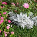 Ogród ozdobny - Rabaty