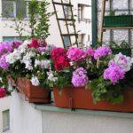 Kwiaty na nasłonecznione balkony