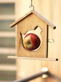 karmnik ptaki