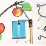 Przyrząd do zrywania owoców